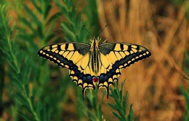 """Картина, постер, плакат, фотообои """"желтая и черная бабочка и зеленое растение постеры"""", артикул 30793917"""