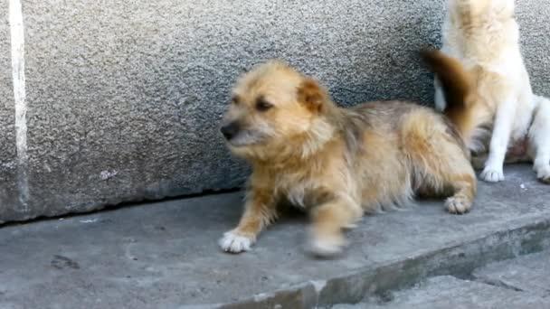 Divertenti Cani E Gatti Cane Carino Cercando Di Dire Qualcosa