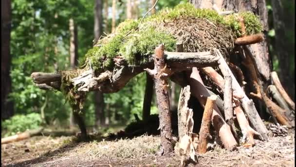 Mohás erdők lodge
