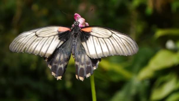 pillangó a virág