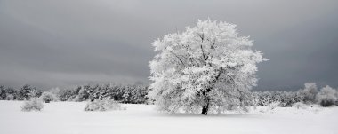 Frozen tree in snowy field and dark sky