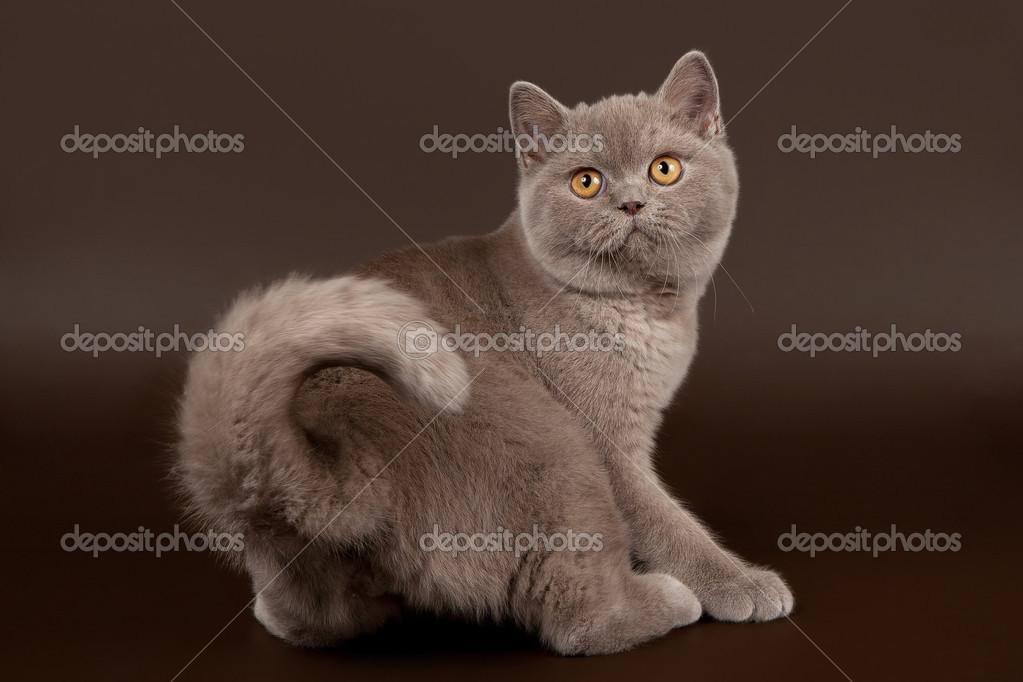 Photos de chatte foncée