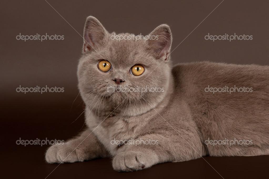 photo de chatte foncée amateur poilu chatte tube