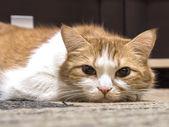 Fotografie Sad cat