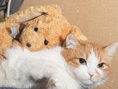 Fotografie traurige Katze