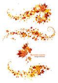 Fotografie podzimní listí prvků návrhu
