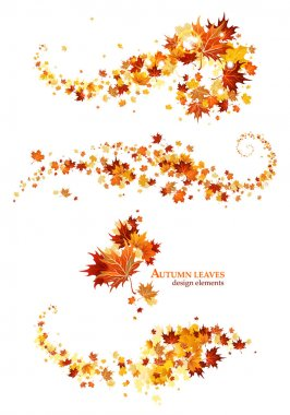 Autumn leaves design elements stock vector