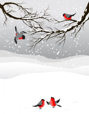 Winter background with birds bullfinch