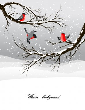 Winter background with bullfinch stock vector