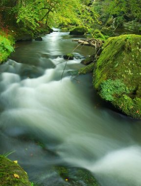 Big mossy sandstone boulder in clear mountain river, fresh green fern above water. Reflections in water level, first colorful beech leaves lay on mossy ground.