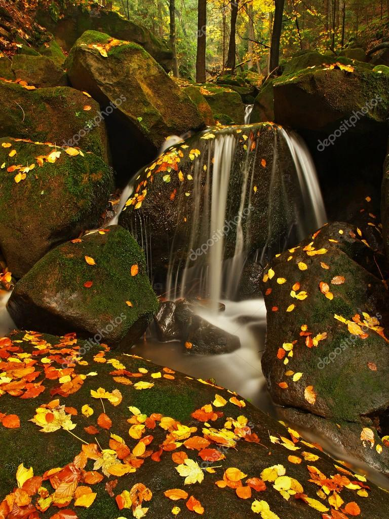 Cascade on small mountain stream, water is running over mossy sandstone boulders and bubbles create on level milky water. Colorful leaves from maple or aspen tree on stones and into water.
