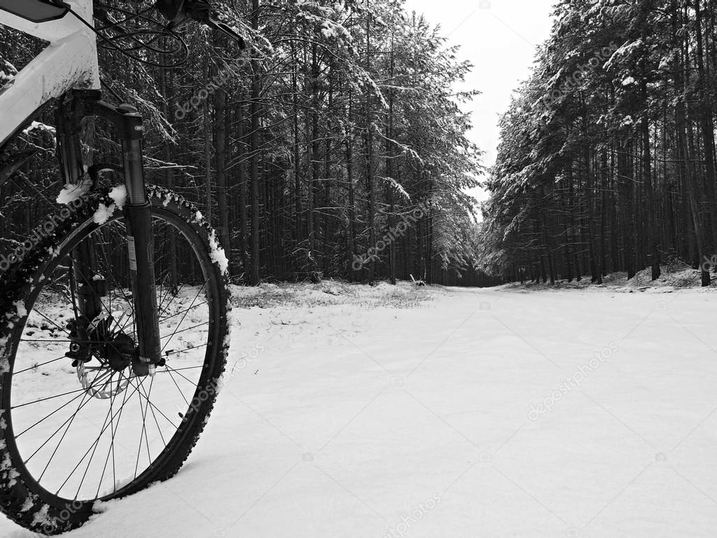 Front wheel and part of frame of mountain bike in the first snow on the forest way. Melted snow flakes on tyre, silenter and disk break. Black and white photo.