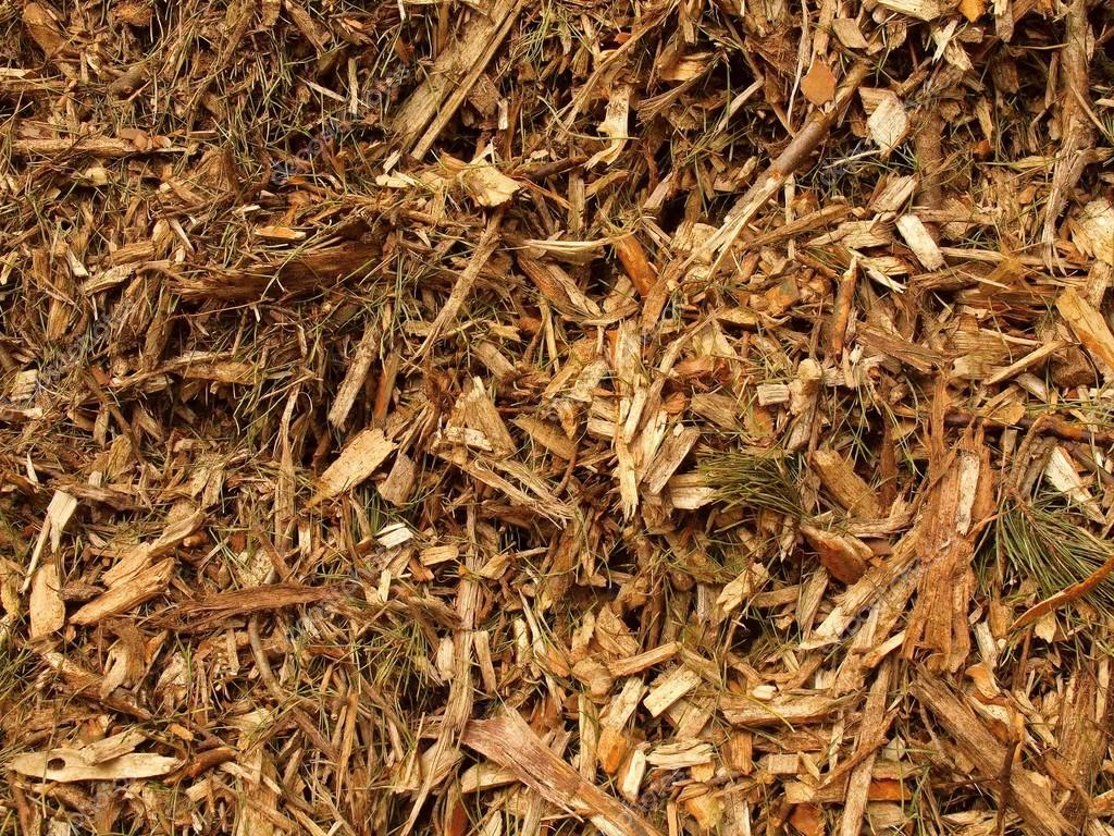 Fresh Wet Wood Chip From Alder Tree Nature Texture Stock Photo