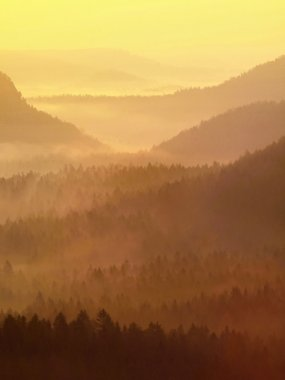 Gold misty daybreak in a beautiful valley of Saxony Switzerland park. Sandstone peaks increased from fog, the fog is colored to blue, gold and orange.