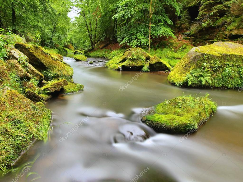 Big mossy boulders in water of mountain river. Clear blurred water with reflections. Gulch covered beeches and maple trees with first colorful leaves, rain drops on light green fer