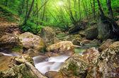 fiume di montagna in primavera. un flusso dacqua nella foresta e mounta