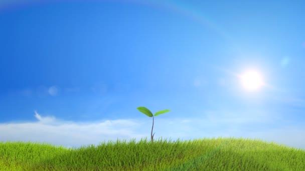 strom, který roste na zeleném kopci s pozadím slunce a mraky. timelapse. 1080 p HD