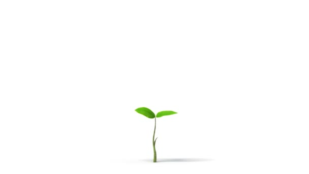 Growing tree on white background, isolated object. Convenient for multimedia use. Symbol of growth, ecology, environmental care, prospects, family, evolution. HD. Alpha mask included