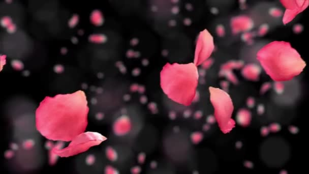 Flying rose petals on black background. HD 1080. Looped animation. Alpha mask included.