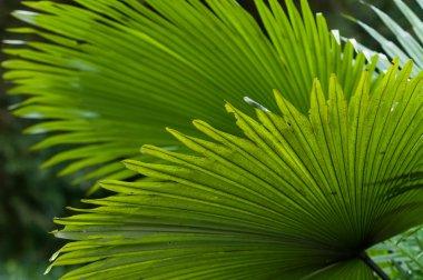 "Картина, постер, плакат, фотообои ""растения джунглей "", артикул 38570641"