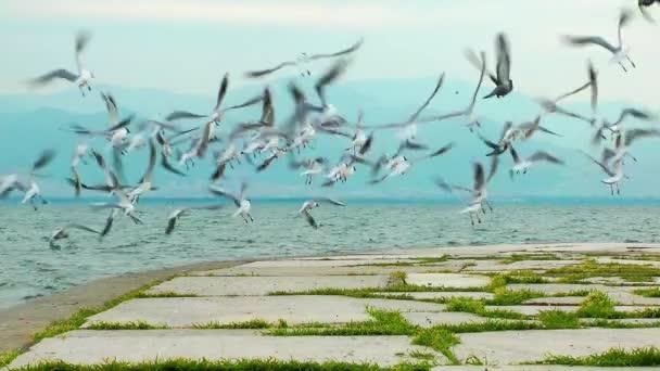 Birds near the sea