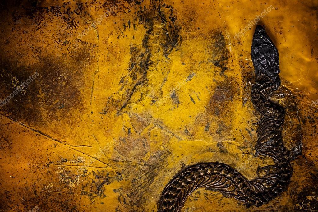 δεινόσαυρος απολιθωμάτων άνθρακα