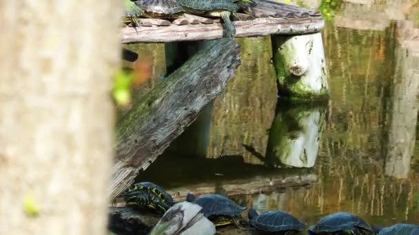 želvy a strom