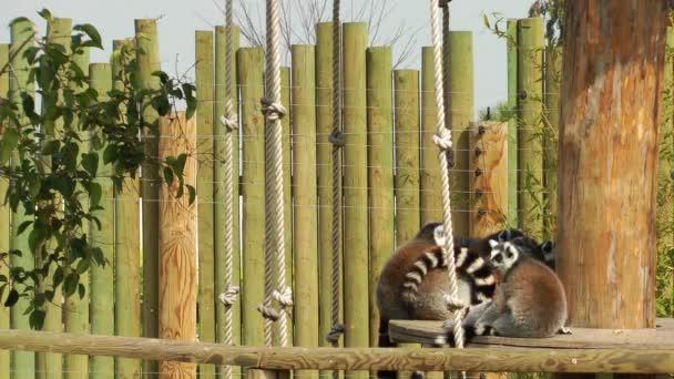 Lemurenfamilie