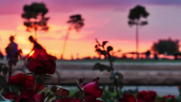 Red Roses and People Silhouette