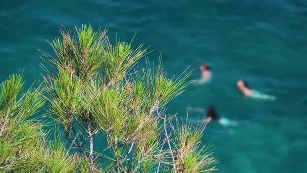 strom a koupání v moři lidí