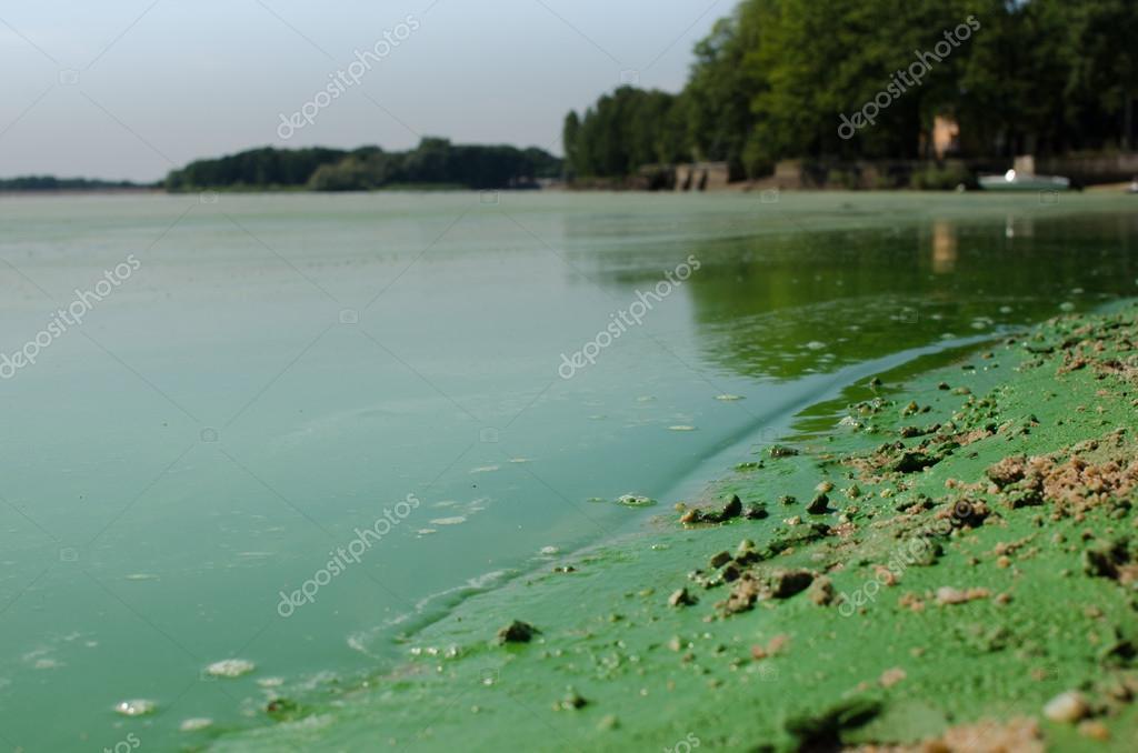 Dirty, green beach
