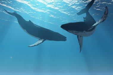 Whale Wonders