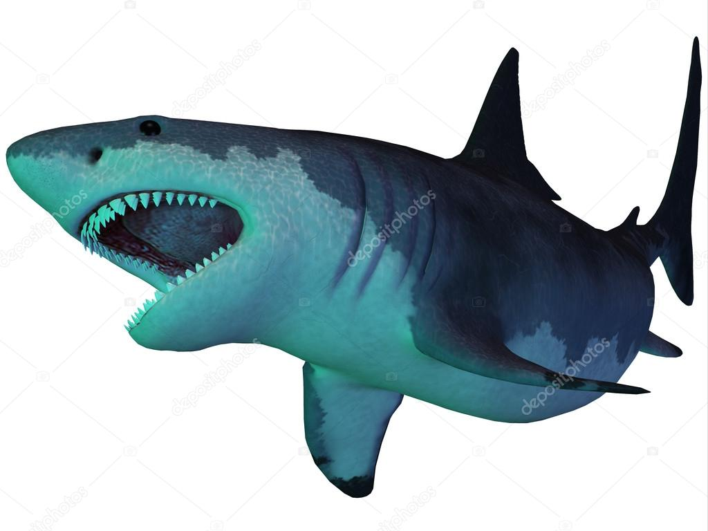 Megalodon Shark Underwater — Stock Photo © CoreyFord #30159969