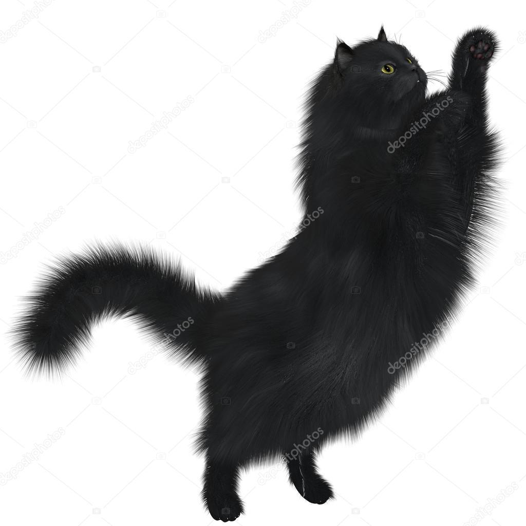 Černá africká kočička obrázek