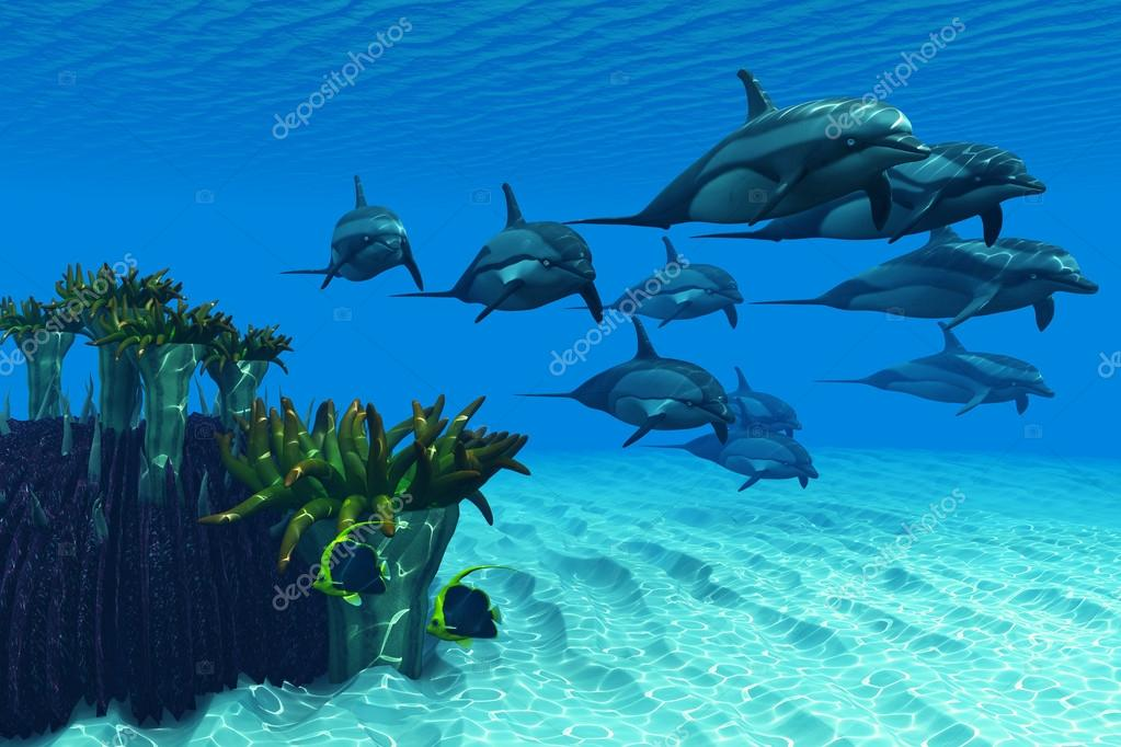 Ocean Striped Dolphins