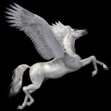 White Pegasus Profile