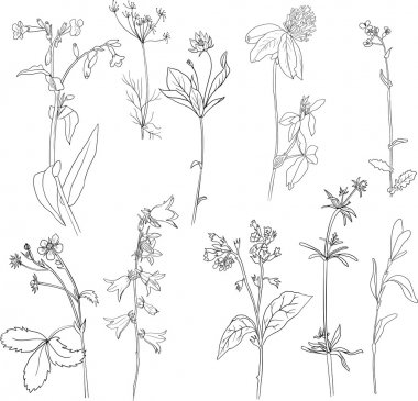 Set of line drawing herbs