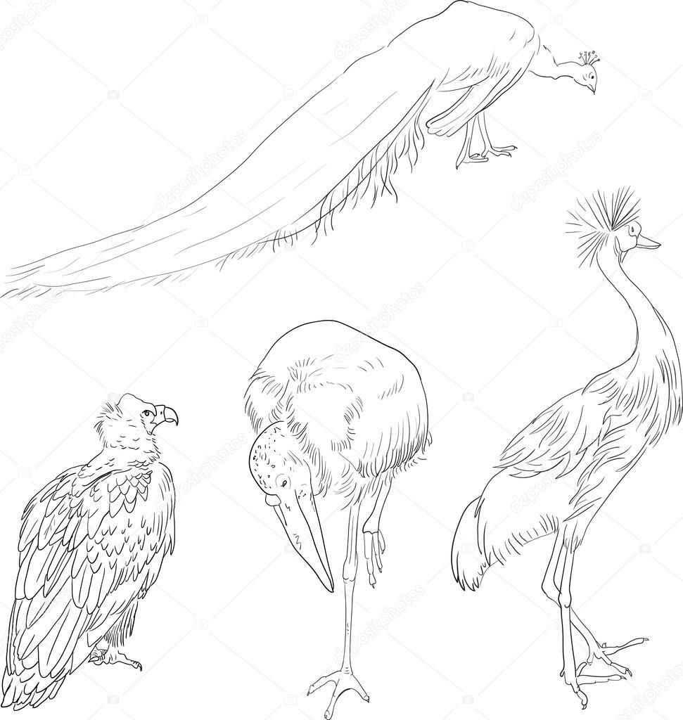 Pájaros Dibujo Lineales Archivo Imágenes Vectoriales