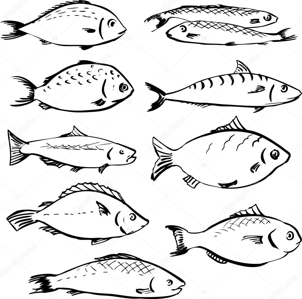 Set of linear drawing fishes