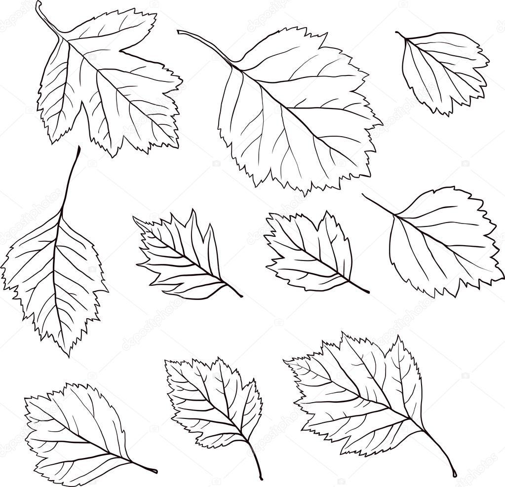 mewarnai mantap djiwa bladeren bomen kleurplaat