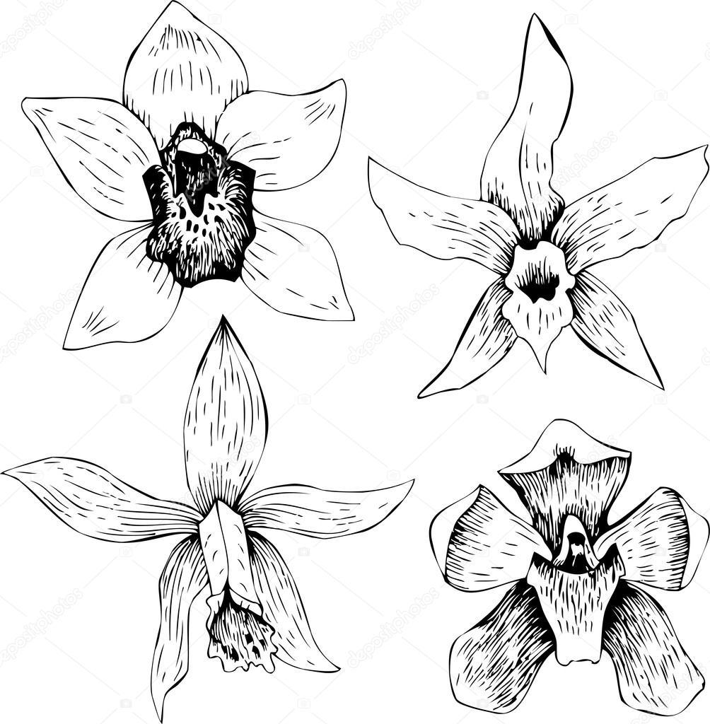 conjunto de orquídeas de dibujo lineal — Vector de stock ...