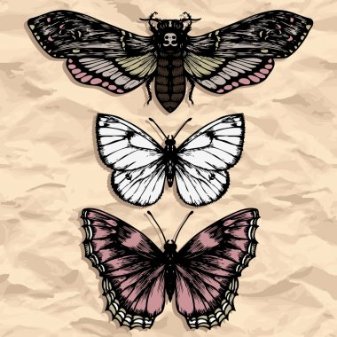butterflies at paper ink drawing