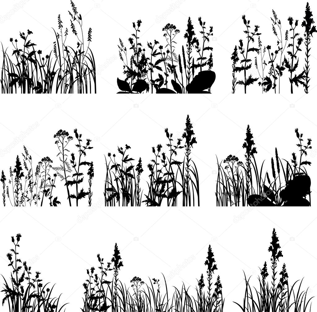 Silhouettes of flowers and grass