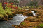 mistico paesaggio del fiume scorre