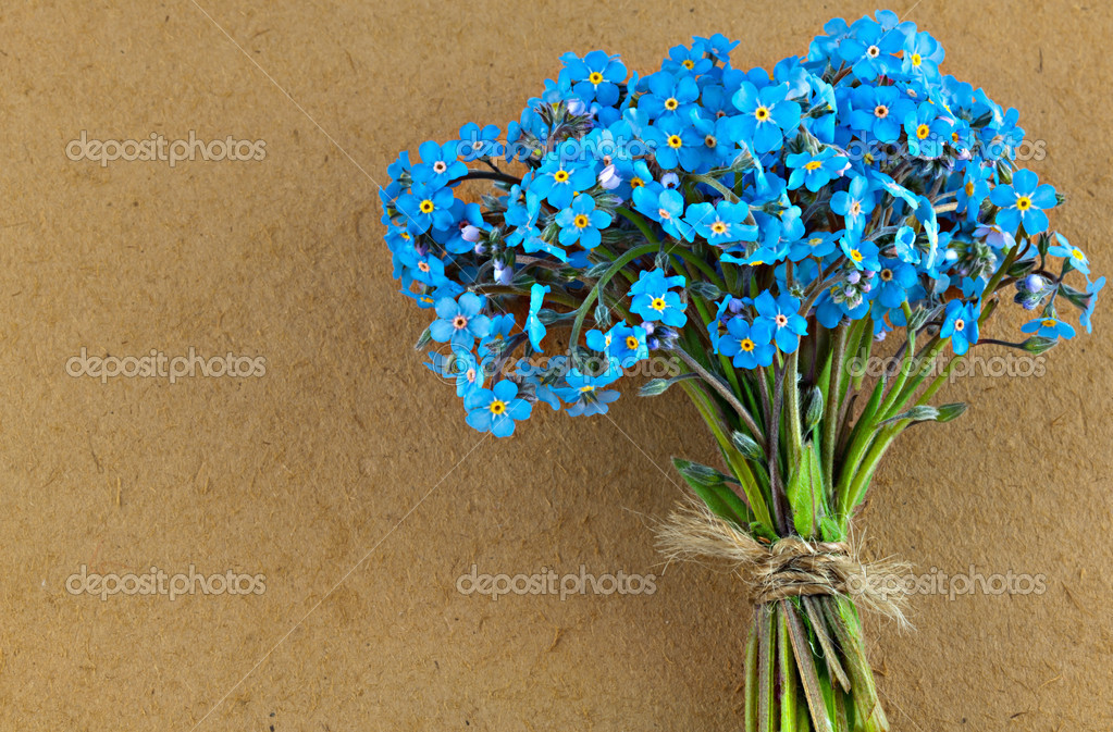 Bunch Of Blue Forget Me Not Flower Stock Photo Longtaildog 34963285