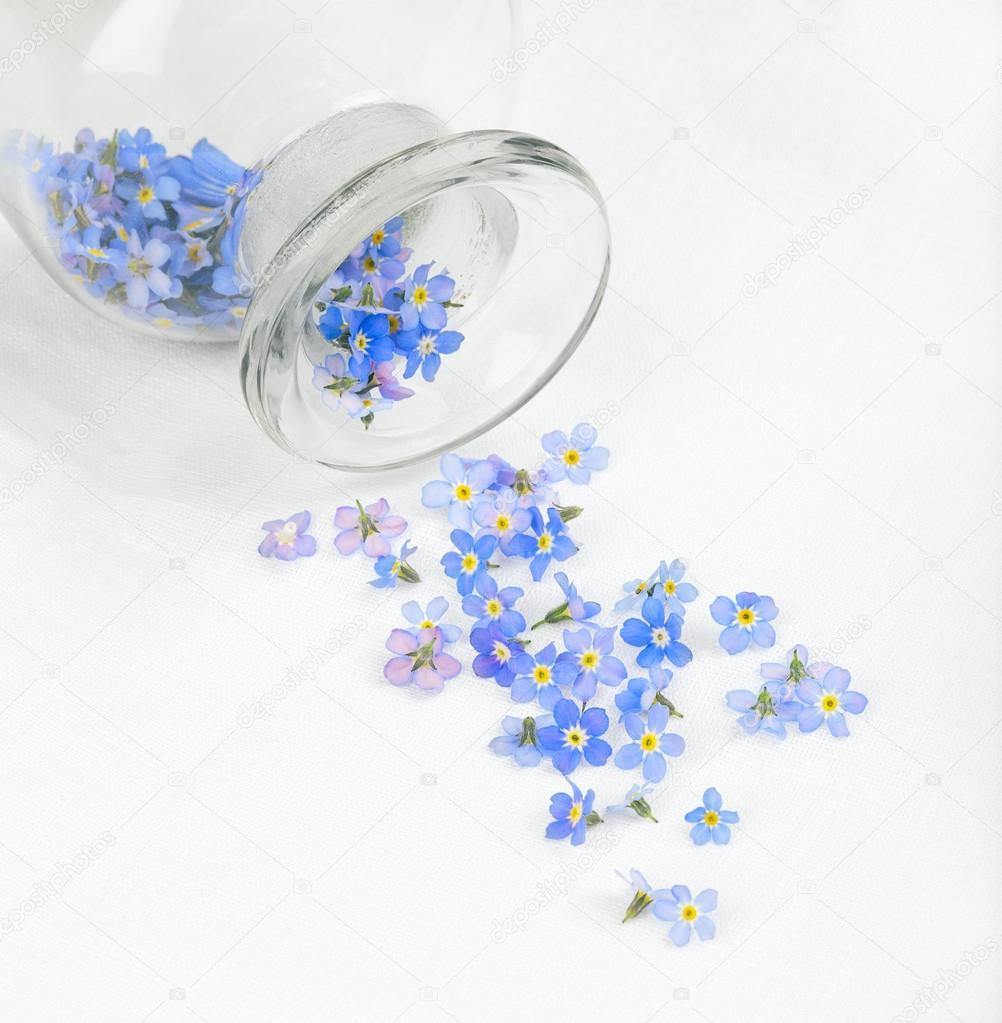베로니카 꽃 흰 식탁보에 흩어져 — 스톡 사진 © longtaildog #48267503