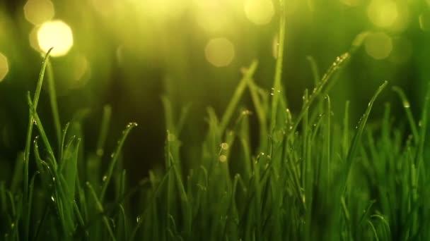 Close-up shot of green grass with rain drops. Camera moves using slider.
