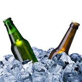 Bierflaschen mit Eiswürfel
