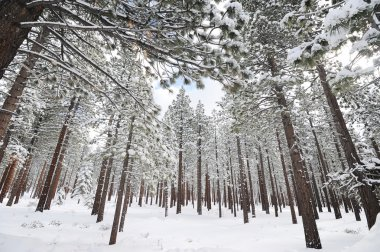 Trees covered with snow in mountains