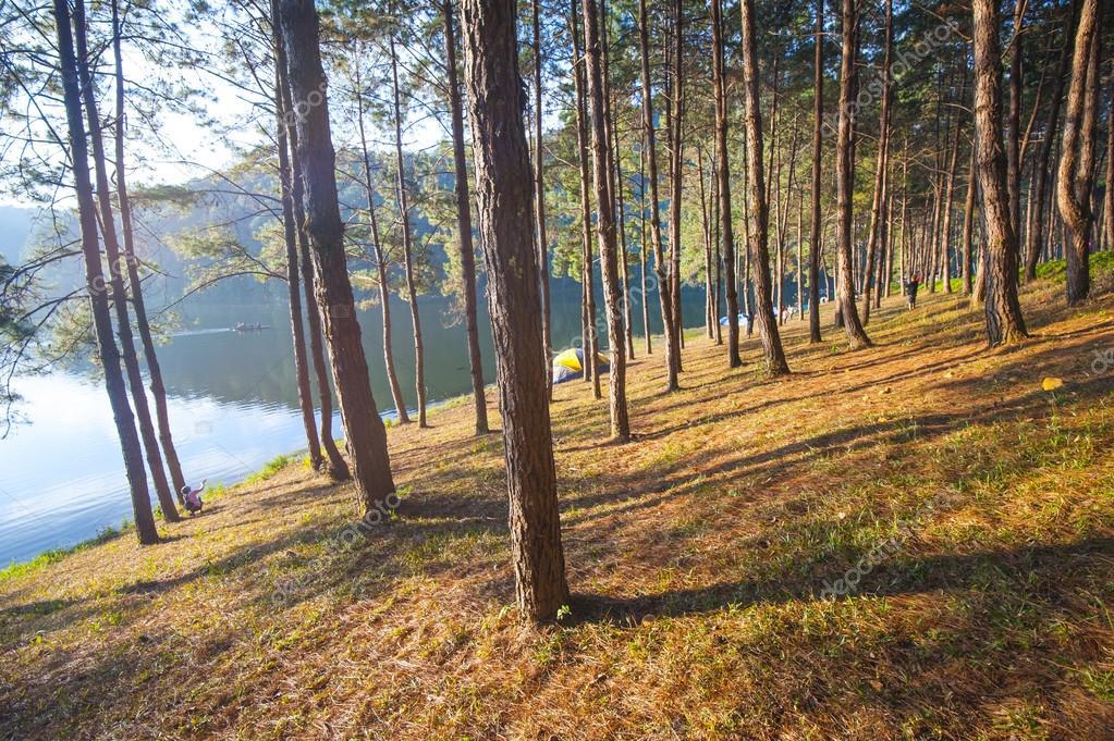 Фотообои Tree near water lake at sunrise